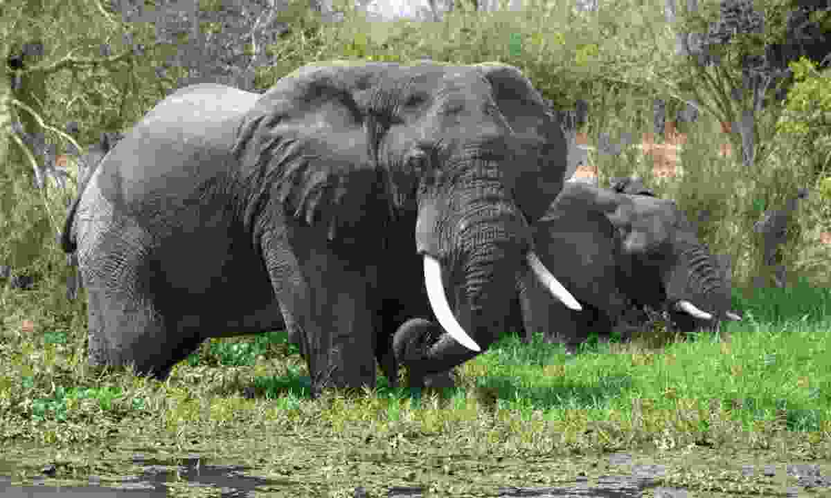 Elephants in Nkhotakota Wildlife Reserve, Malawi (Rainbow Tours)