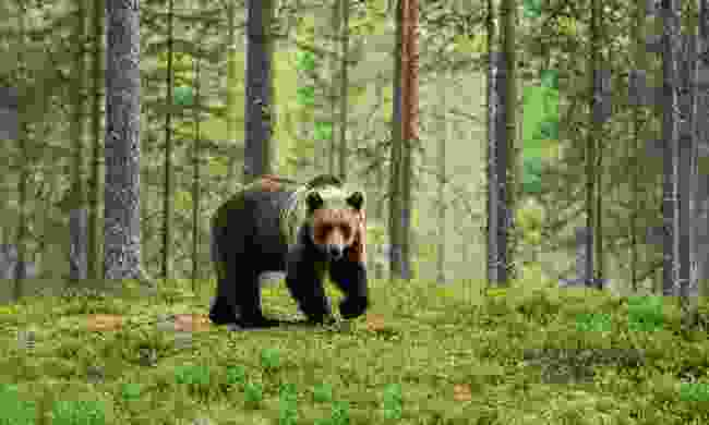 Look out for Brown bears in Greece