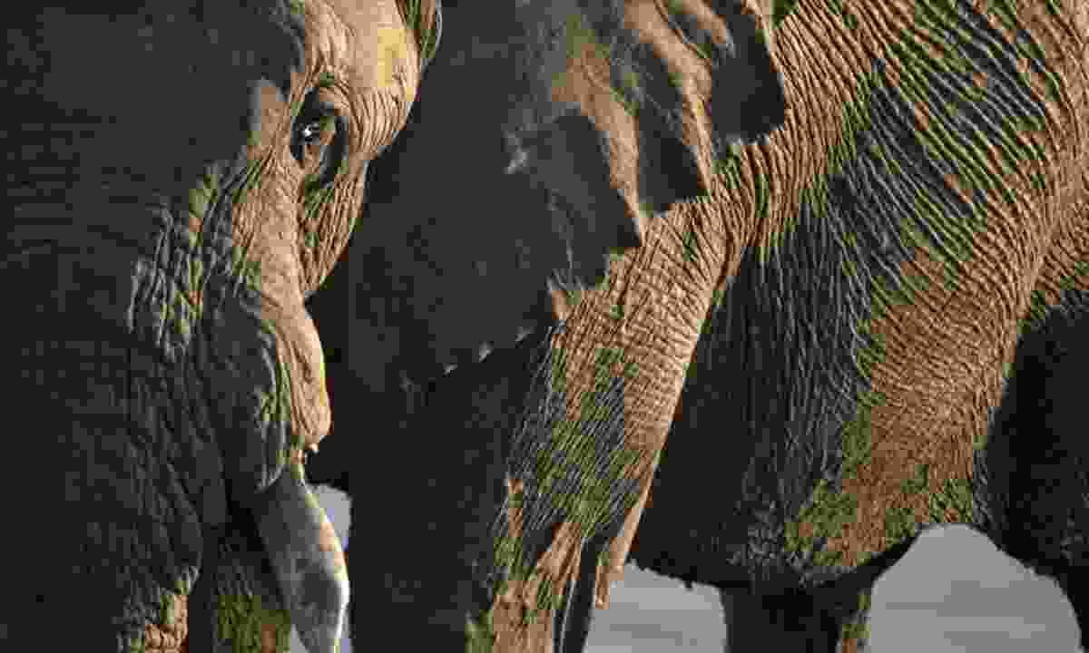 Elephant in Hwange National Park, Zimbabwe (Original Travel)