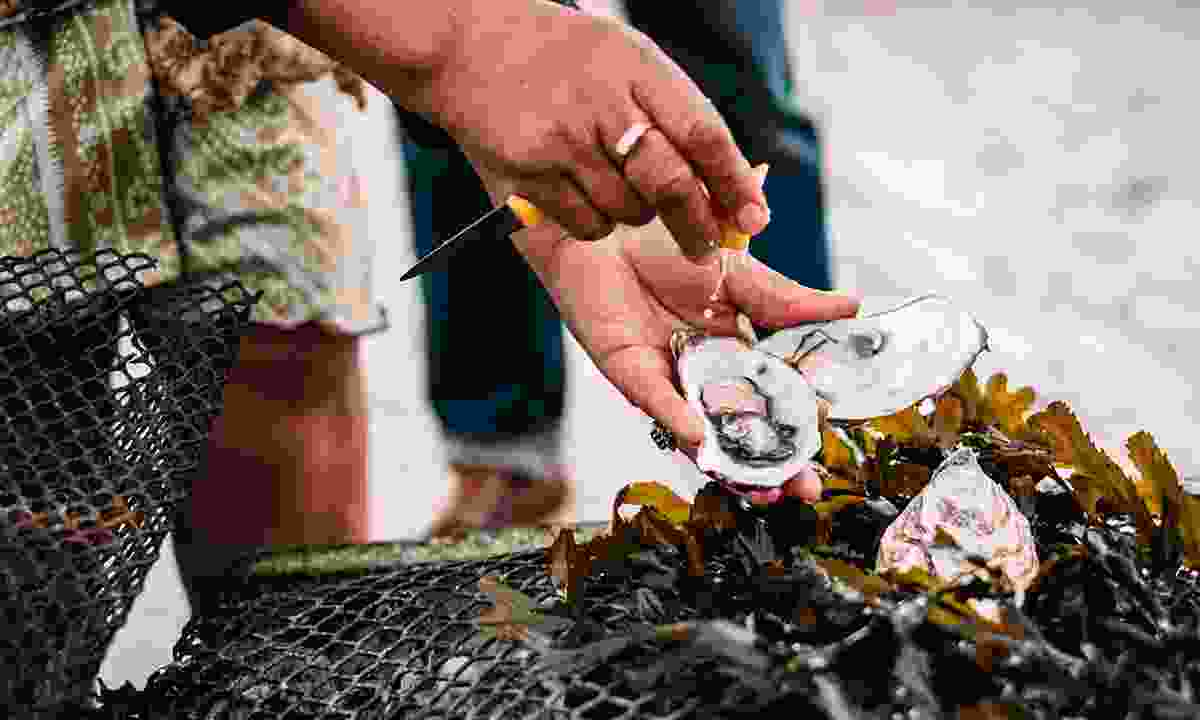 Forage for your own oysters on Jersey's shoreline (Visit Jersey)