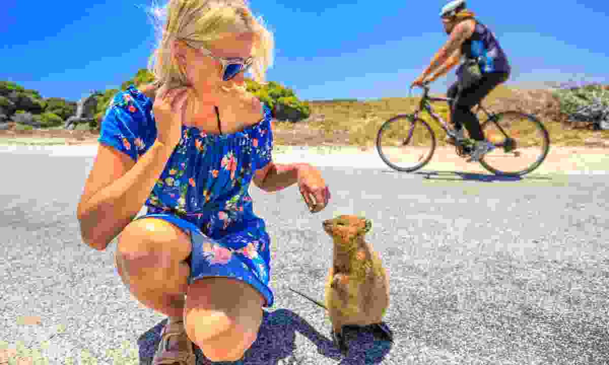 A friendly quokka (Dreamstime)