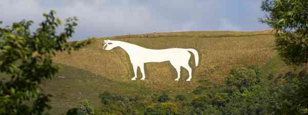 White Horse (Dreamstime)