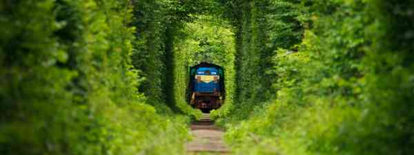 Train passing through the Tunnel of Love in Ukraine (Dreamstime)