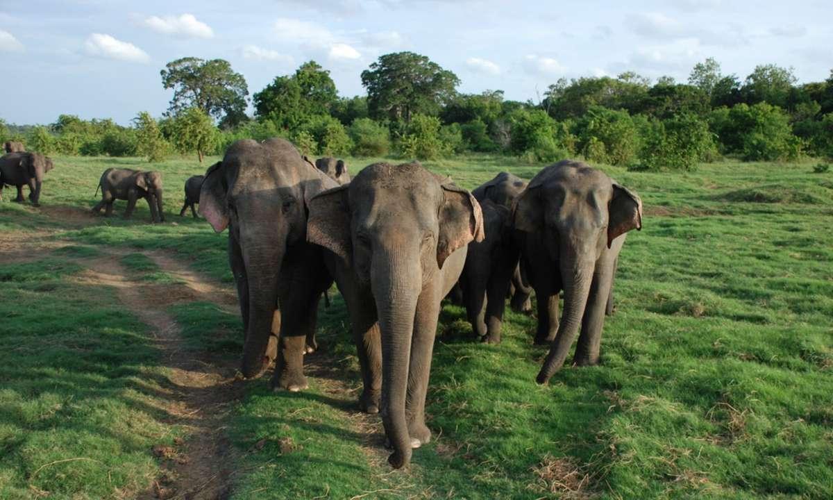 Born Free Transit Home, Sri Lanka (KE Adventure)