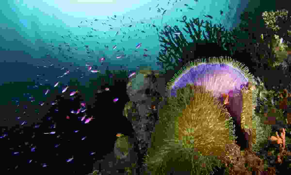 Discover fascinating marine species (Wade Imaging)