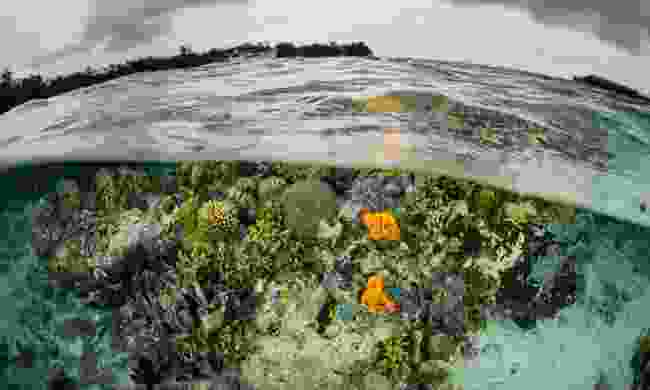 Solomon Island coral reef (Dreamstime)