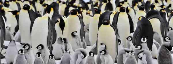 Penguins in Antarctica (Dreamstime)