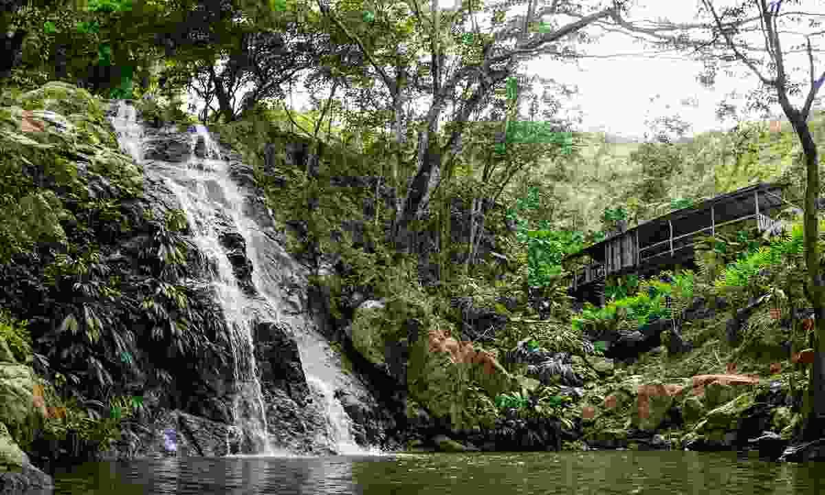 A waterfall in the forest in Minca (Shutterstock)