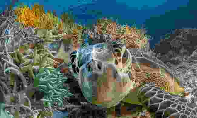 Tubbataha Reefs Natural Park, Palawan, Philippines (Shutterstock)