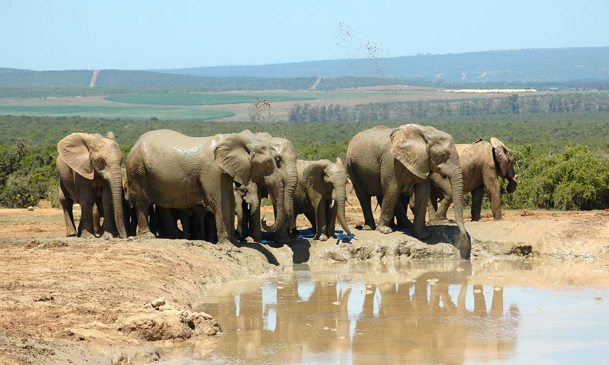 Elephants playing in the mud in Addo National Park (Dreamstime)