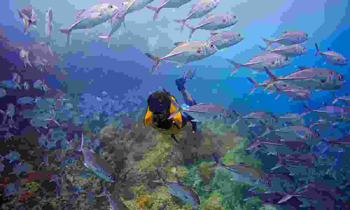 Cocos Island National Park's biggest lure is its incredible diving opportunities