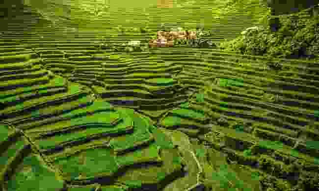 Rice Terraces of the Philippine Cordilleras, Philippines (Shutterstock)