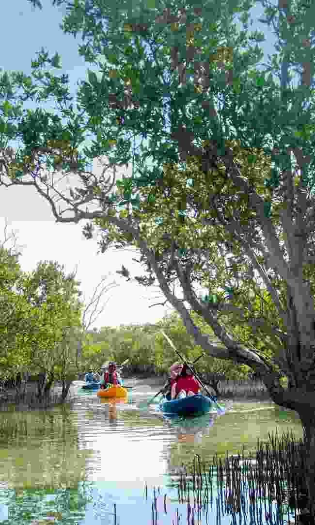 Kayaking the mangrove forest – probably the least famous site in the city (Phoebe Smith)
