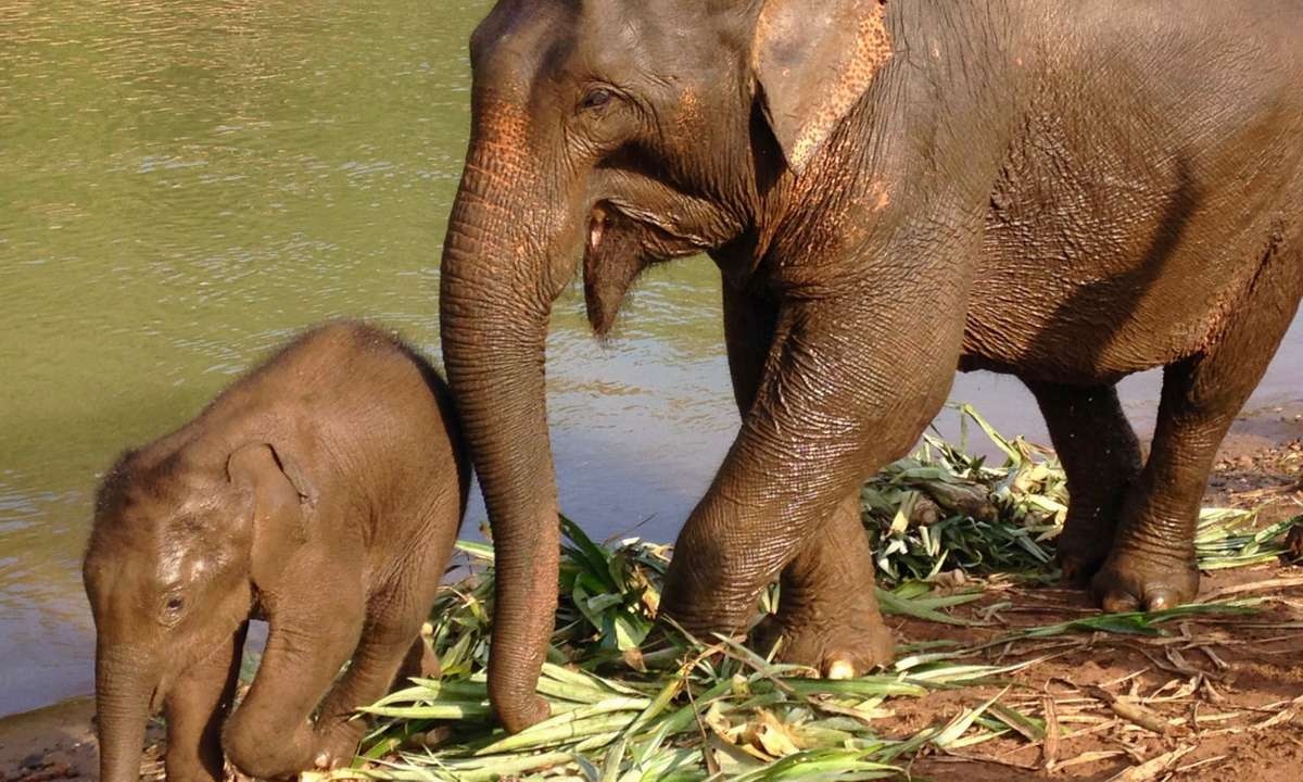 Elephants in Laos (Dreamstime)