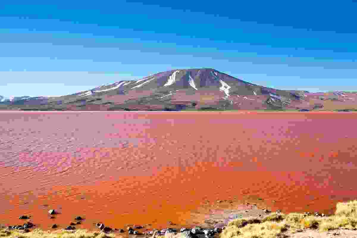 The gorgeous red lake, Laguna Colorada, in Bolivia (Dreamstime)