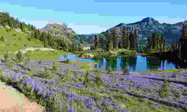 A field of wildlflowers along the Pacific Crest Trail  (Shutterstock)
