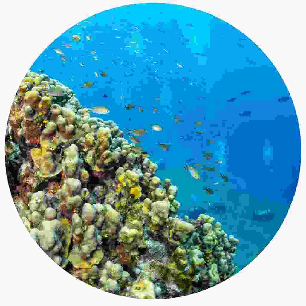Beautiful reefs flourish under the island's shore