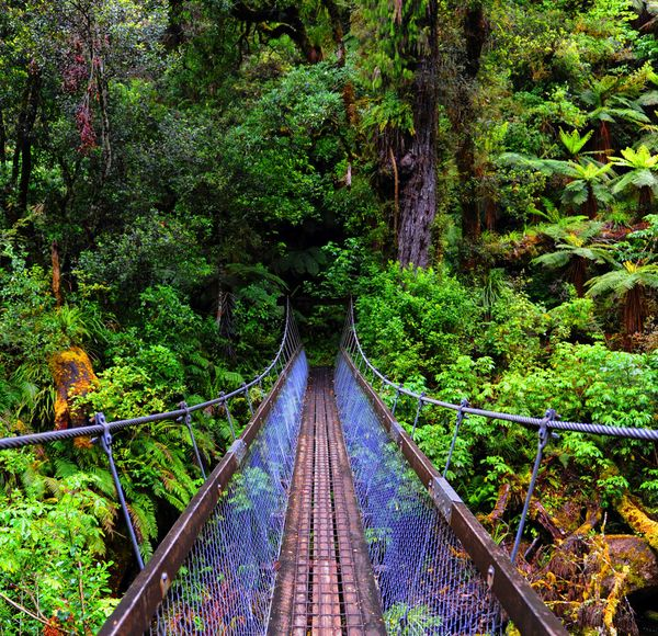 If you like this, try... Lake Waikaremoana Track. This 46km Great Walk explores North Island's lesser-visited Te Urewera National Park, rich in Maori history.