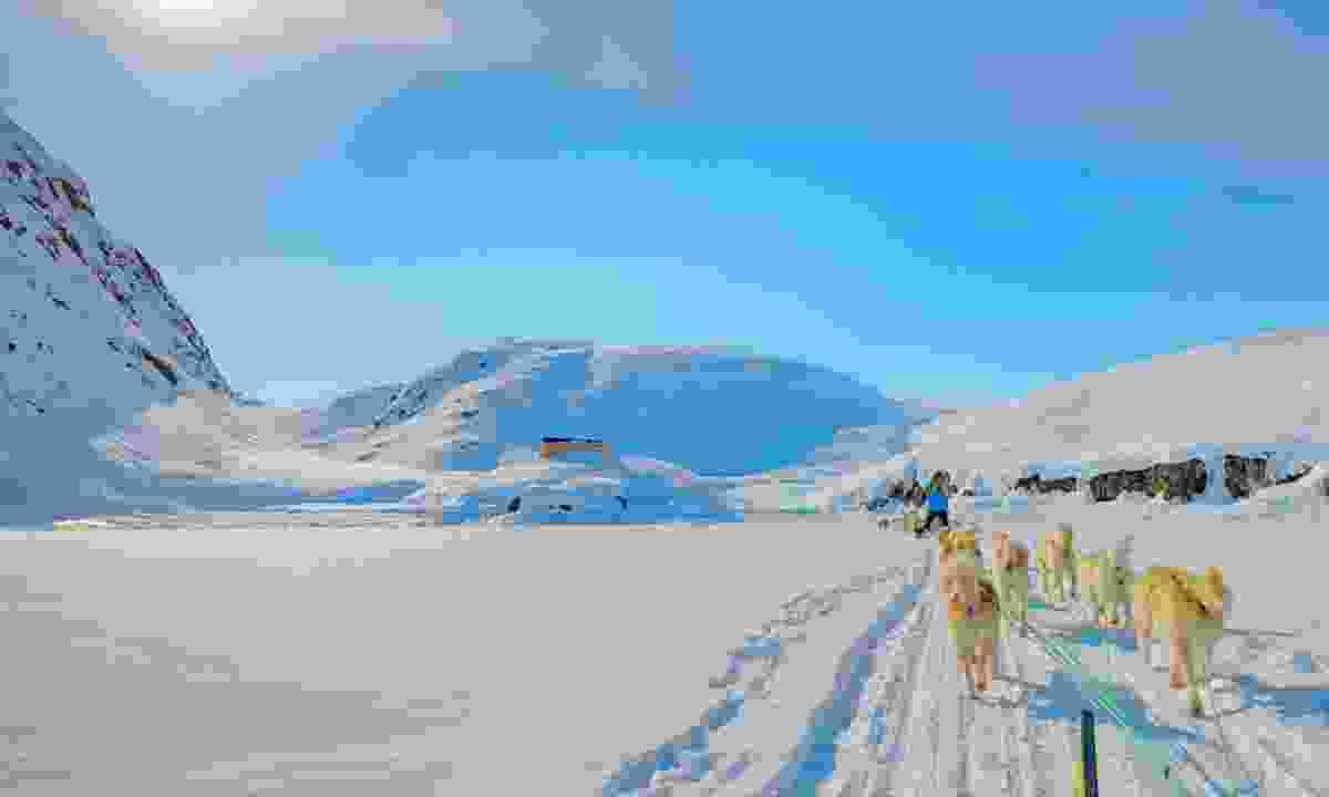 Husky-sledding in Greenland (Dreamstime)