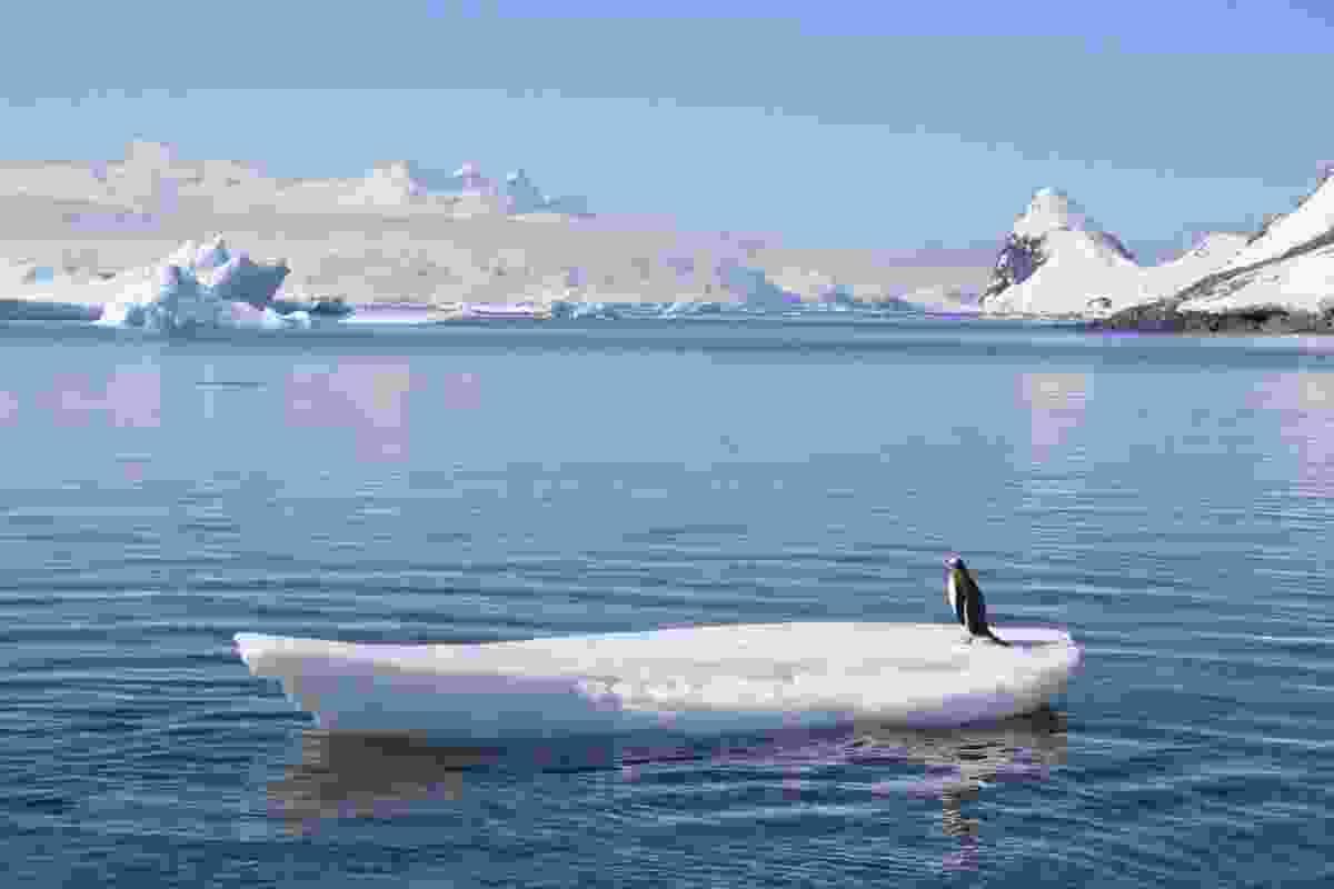 Penguin on ice surfboard, Antarctica (Graeme Green)