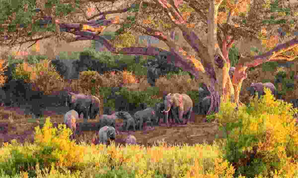 Kruger National Park, South Africa (Shutterstock)