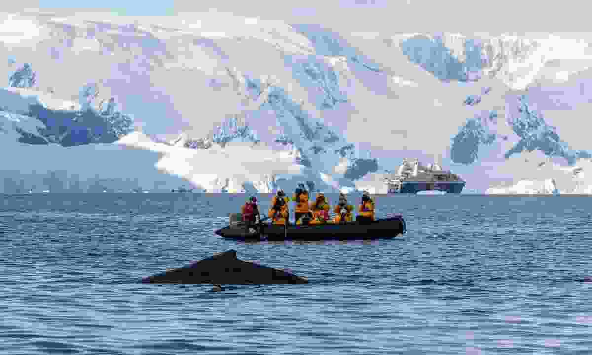 Quick access to Zodiacs means you'll have a better chance of seeing whales and other wildlife up close (Cindy Miller Hopkins)