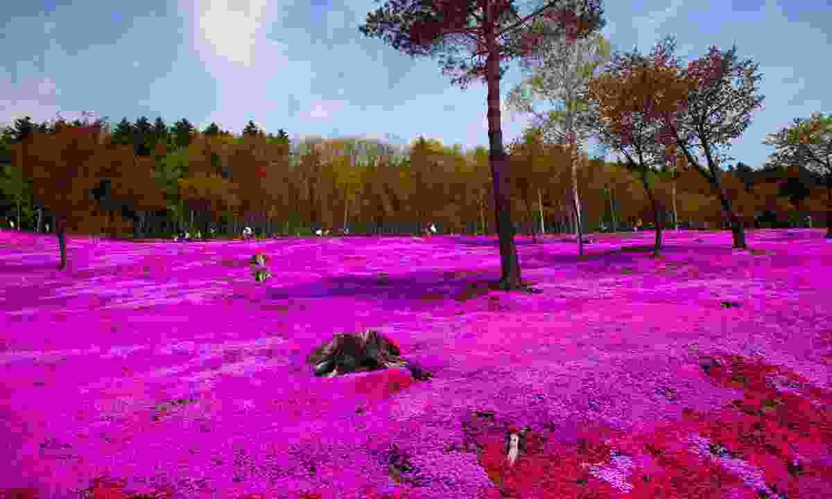 Takinoue Park in Hokkaido (Shutterstock)