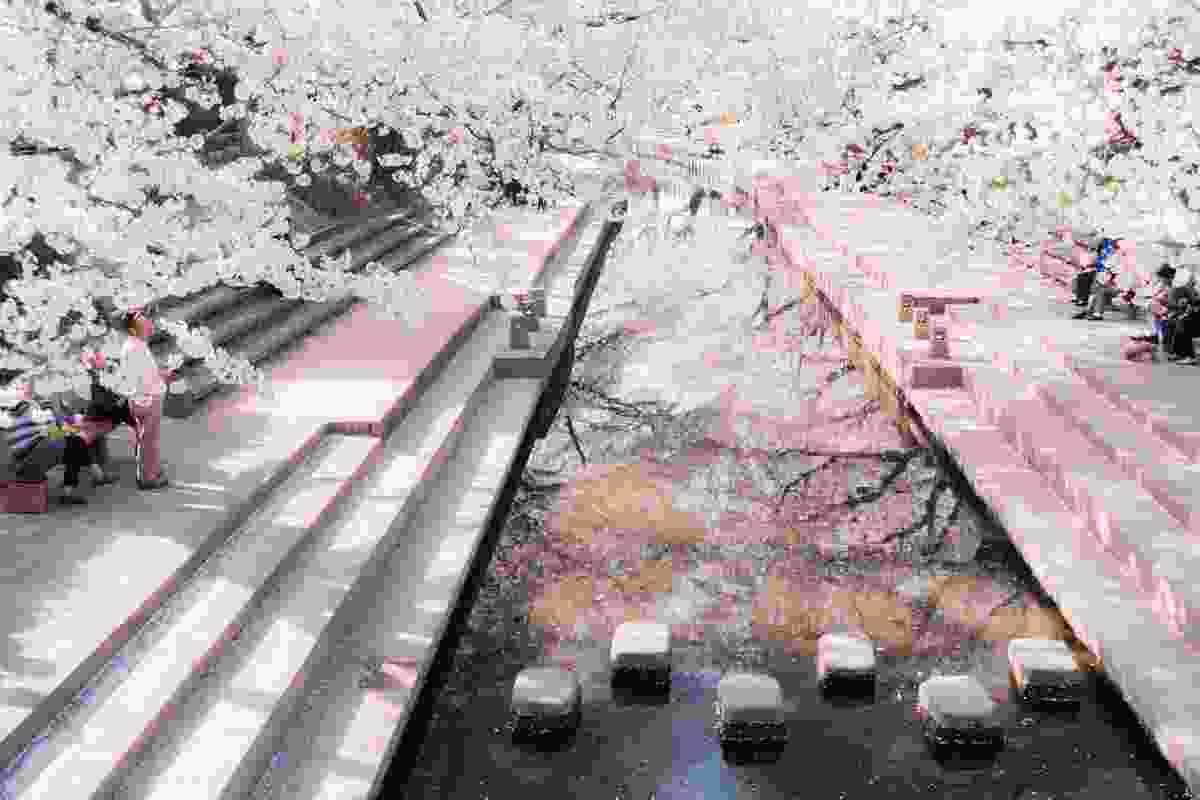 Cherry blossom or 'sakura' along the Motoara River, Kumagaya, Japan (Shutterstock)