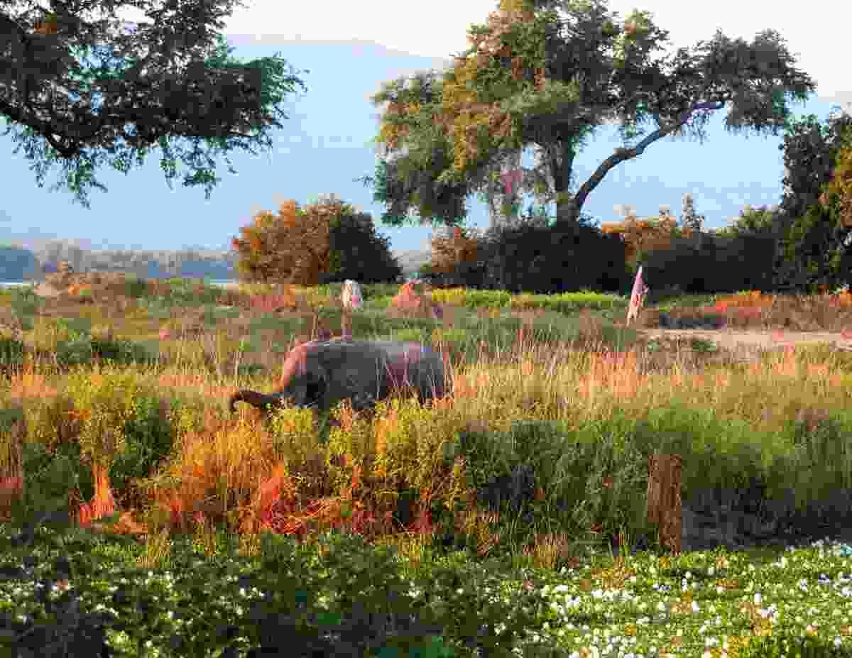 An elephant in the bush in Mana Pools (Shutterstock)