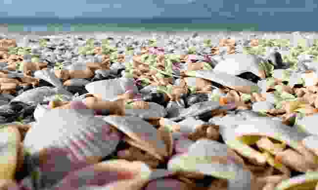 Look out for beautiful shells on the shores of Fort Myers
