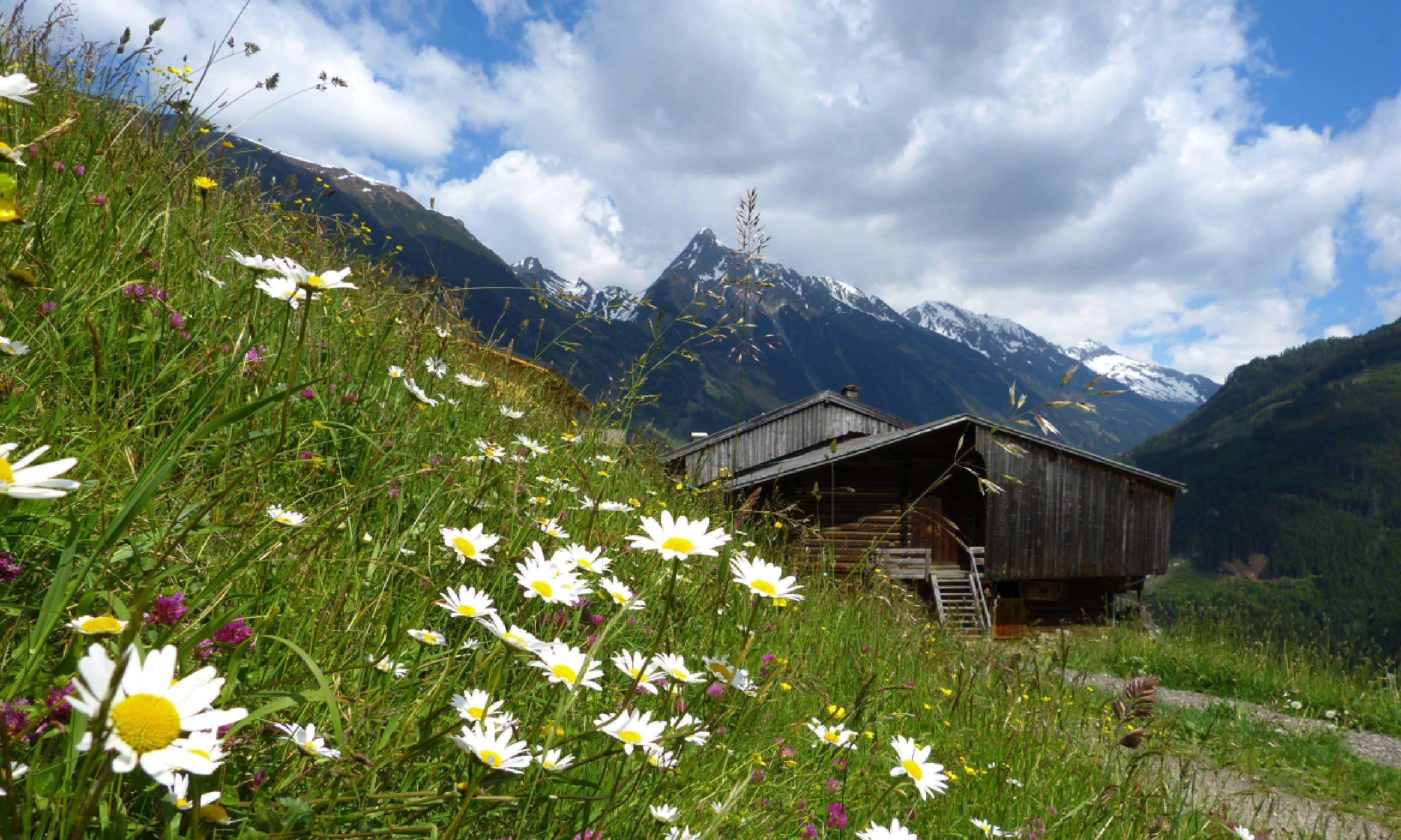 Meadow in Lech-Zürs am Arlberg (Shutterstock)
