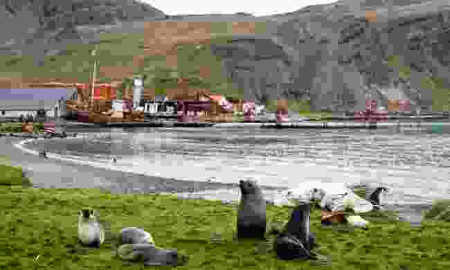 Follow in the footsteps of Shackleton at Grytviken Harbour (Nicky Souness)