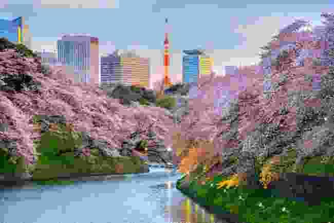 Chidorigafuchi Park, Tokyo (Shutterstock)