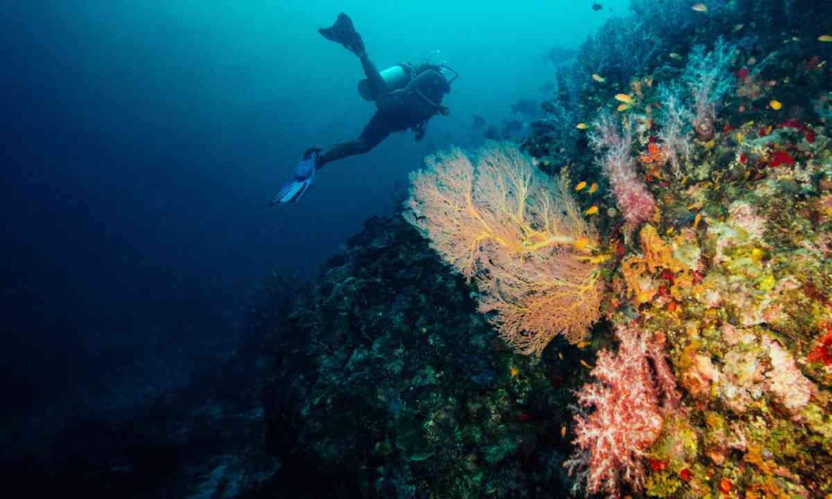 Diving in the Andaman Sea (Dive Worldwide)