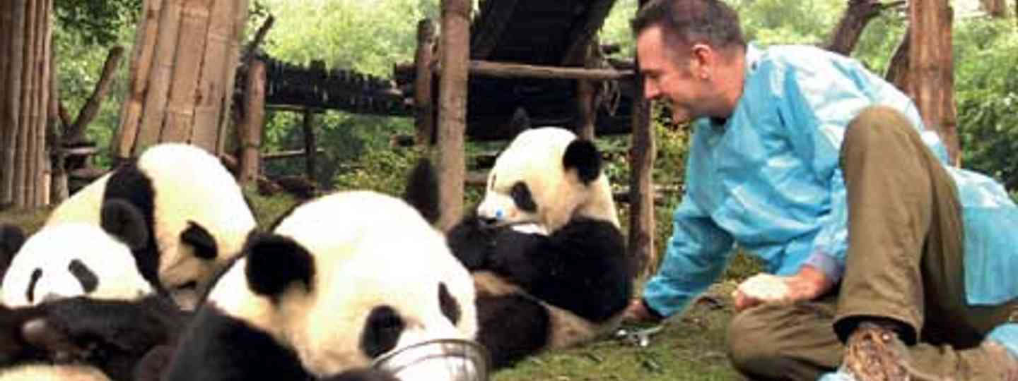 Nigel MArven is fighting the good fight for the pandas (photo: Matthew Wright)
