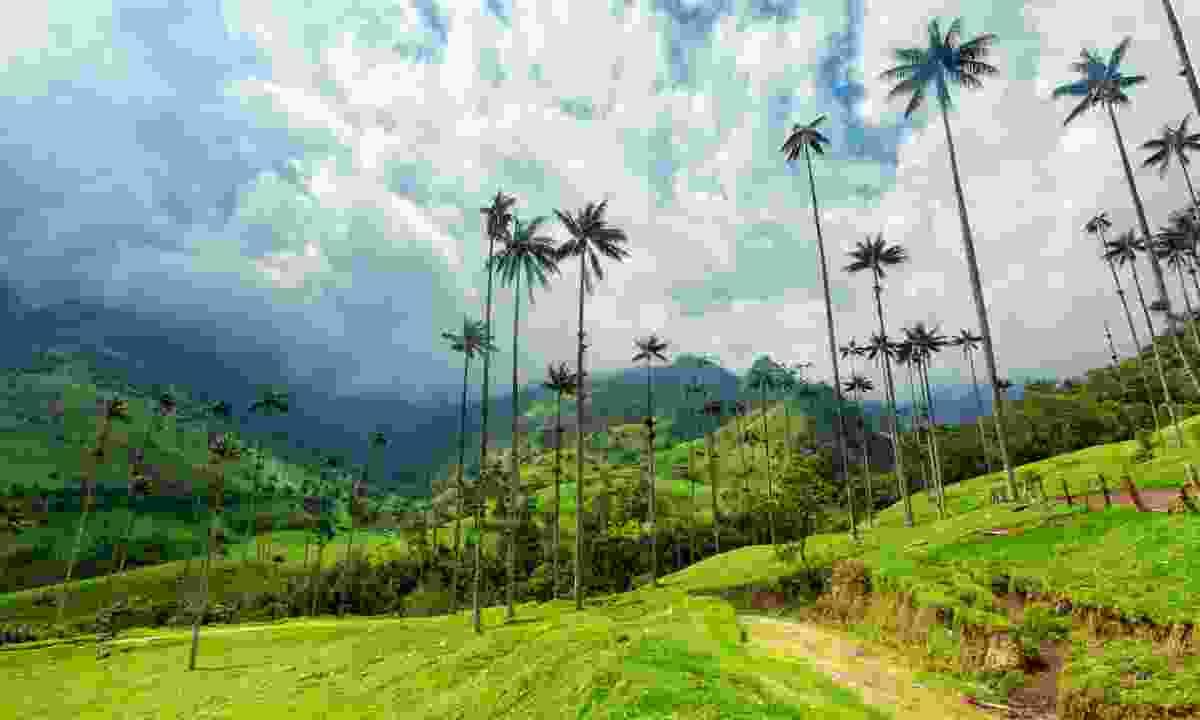 Cocora Valley near Salento, Colombia (Shutterstock)