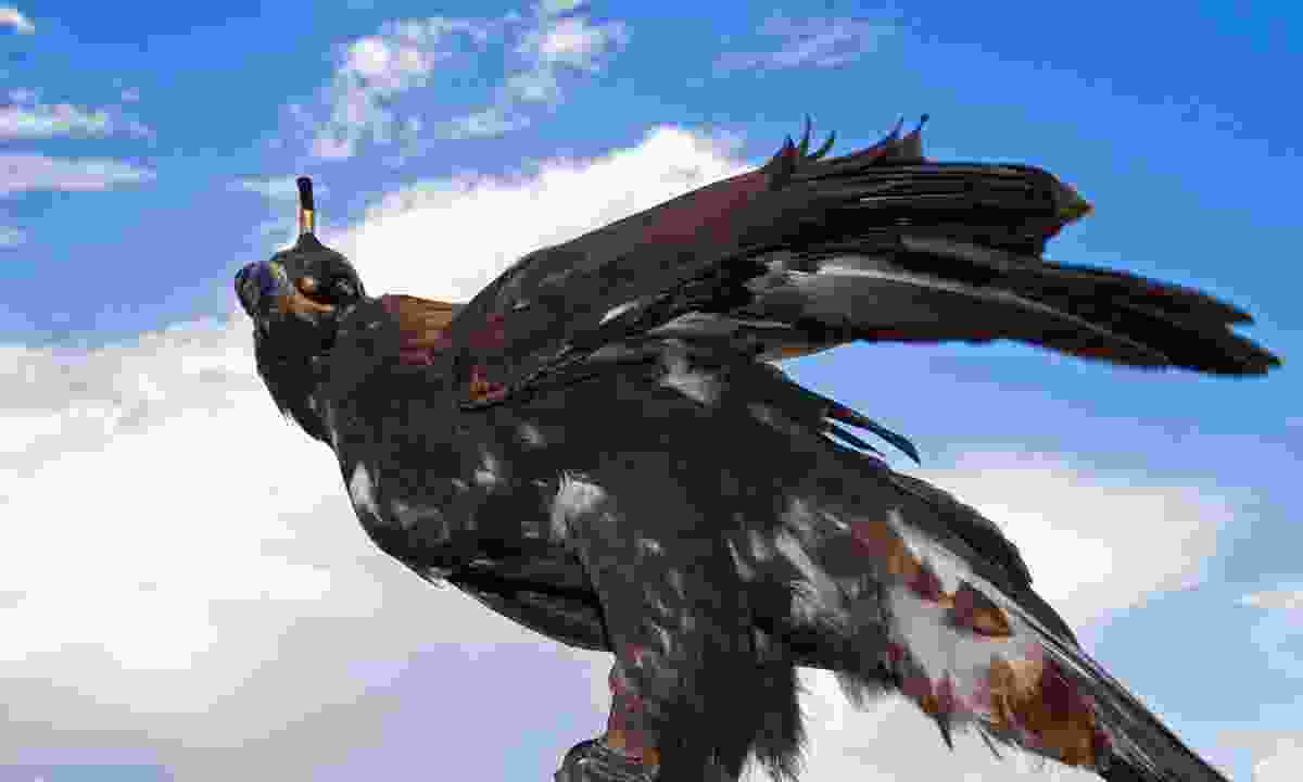 Eagle hunting is a long-standing tradition in Kyrgyzstan (Dreamstime)