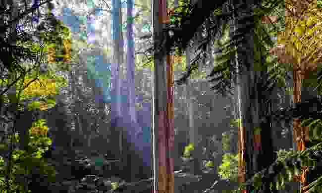 Daintree National Park, Australia (Shutterstock)