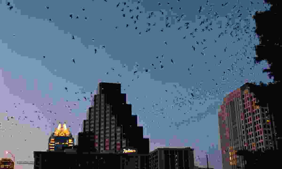 Bats over Austin (Dreamstime)