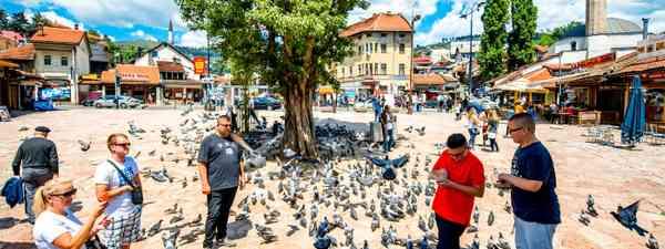 Pigeons take flight in Sarajevo, Bosnia and Herzegovina (Shutterstock)