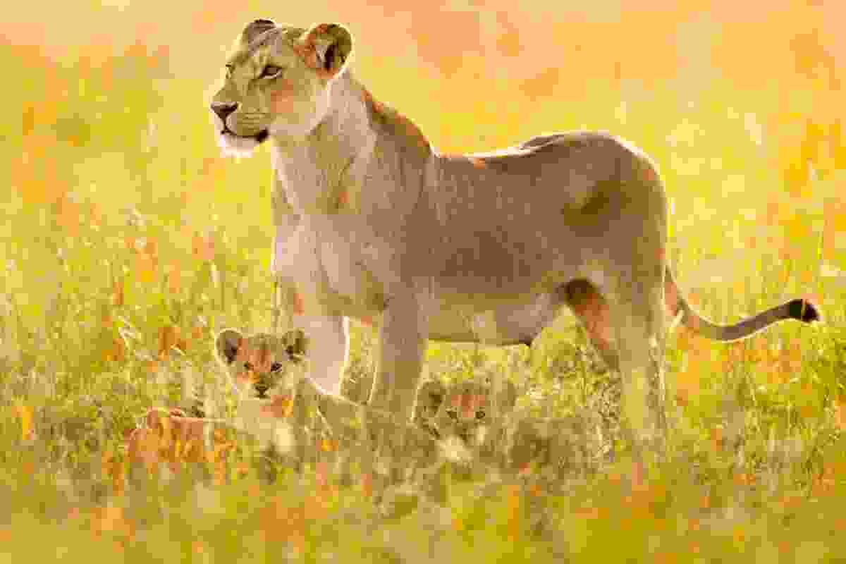 Lion and cub, Serengeti NP, Tanzania (Frans Lanting)