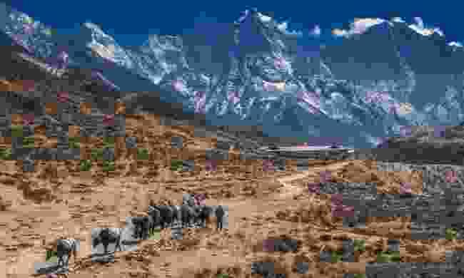 Sagarmatha National Park, Nepal (Debra Corbeil/Planet D)