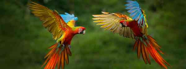A red macaw. (Shutterstock)