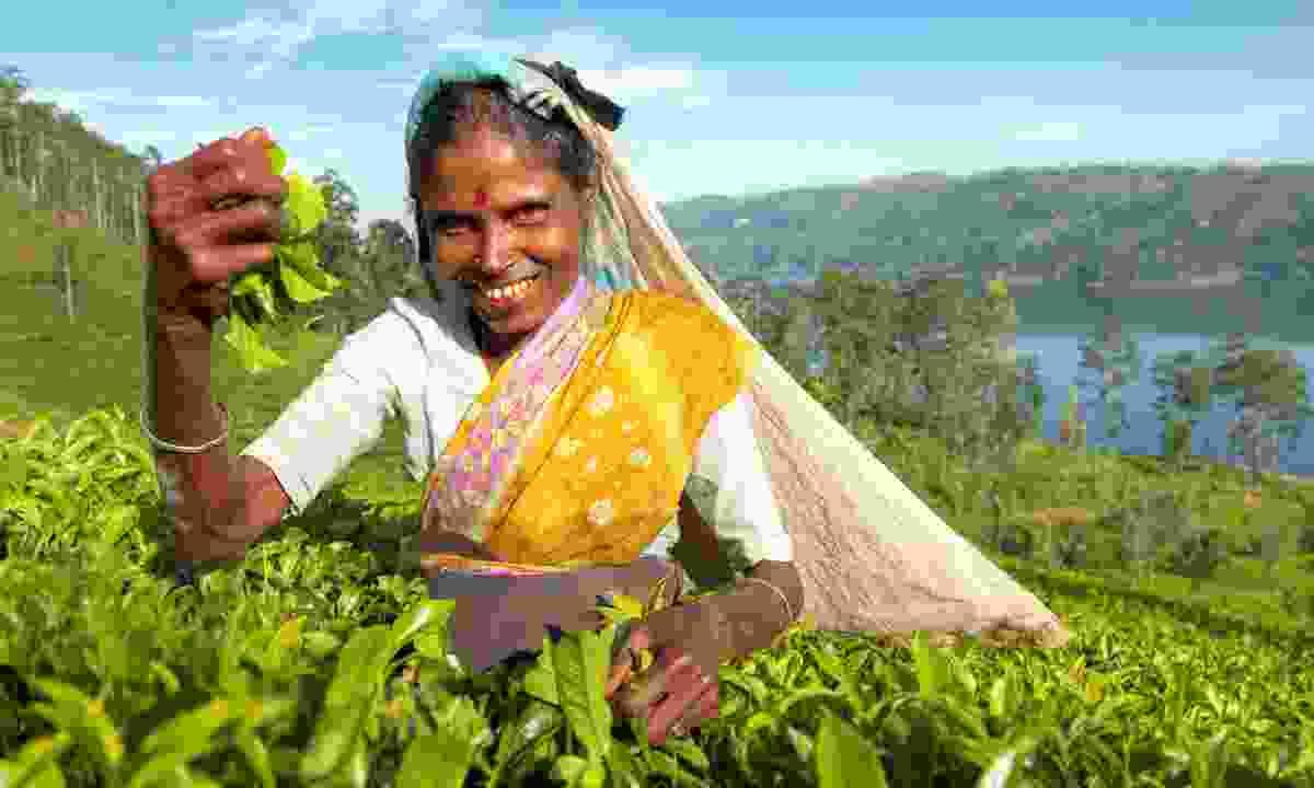 Tea picker in Sri Lanka (Dreamstime)