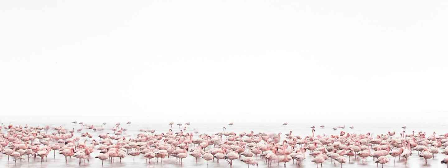 Flamingos Soul (Alessandra Meniconzi, Switzerland, 1st Place, Open, Wildlife)
