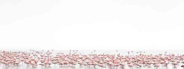 Flamingos Soul (Alessandra Meniconzi, Switzerland, 1st Place, Open, Wildlife)