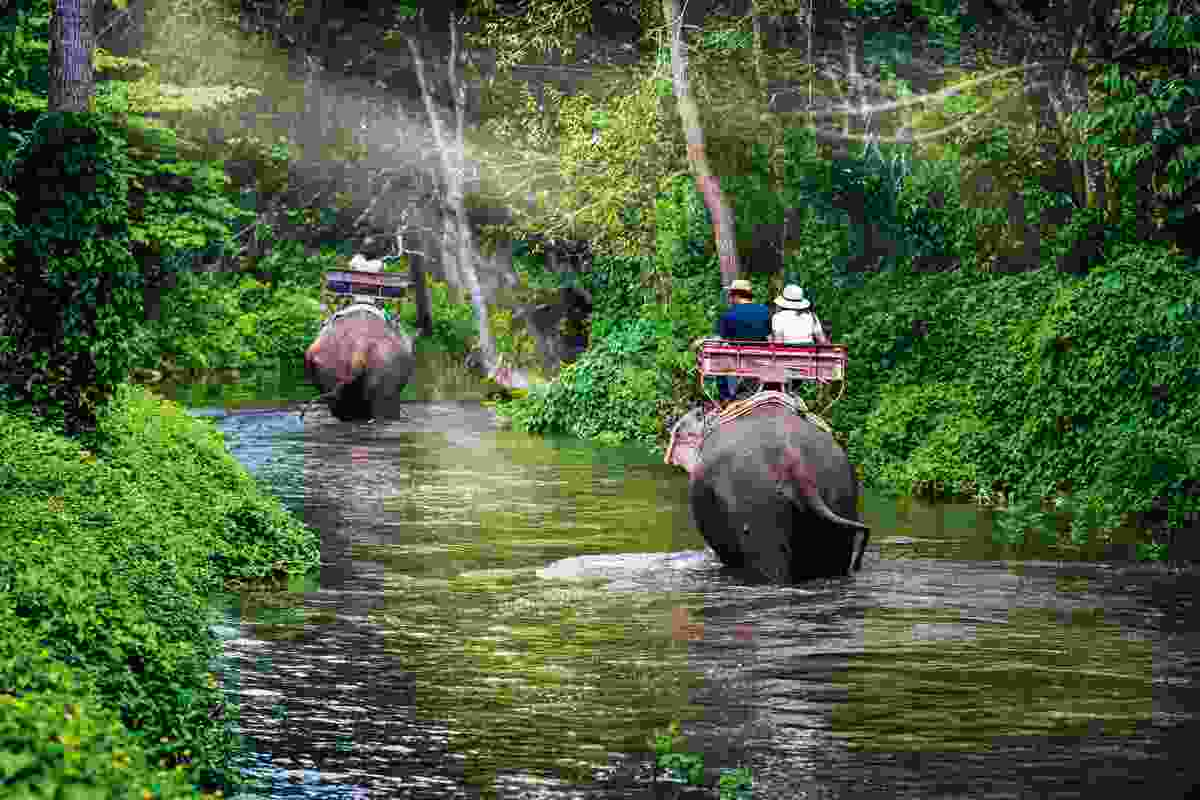 Tourists riding elephants in Thailand (Shutterstock)