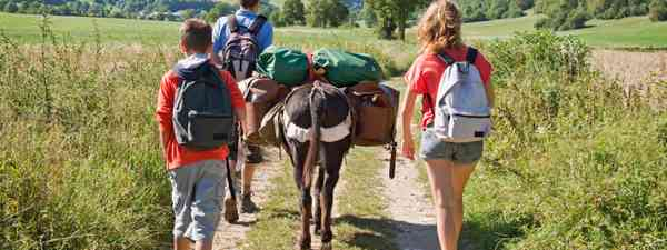 Family hiking with a pack mule (Shutterstock.com. See main credit below)