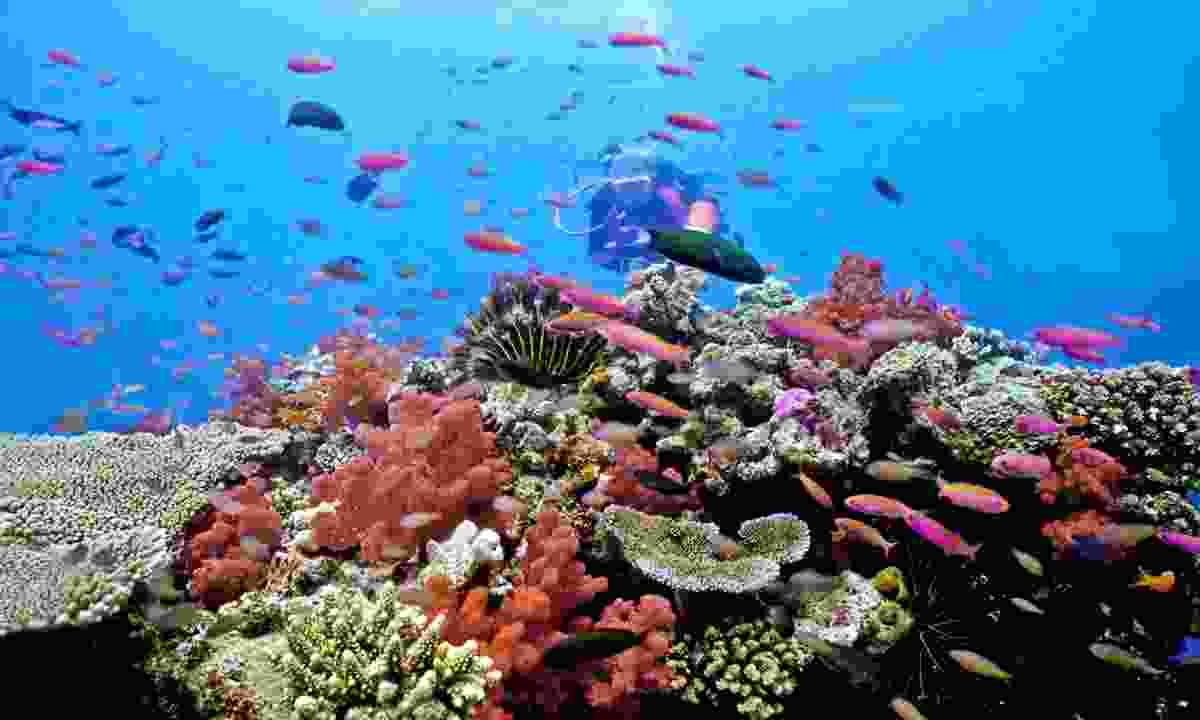 Diving the Great Astrolabe Reef (Dreamstime)