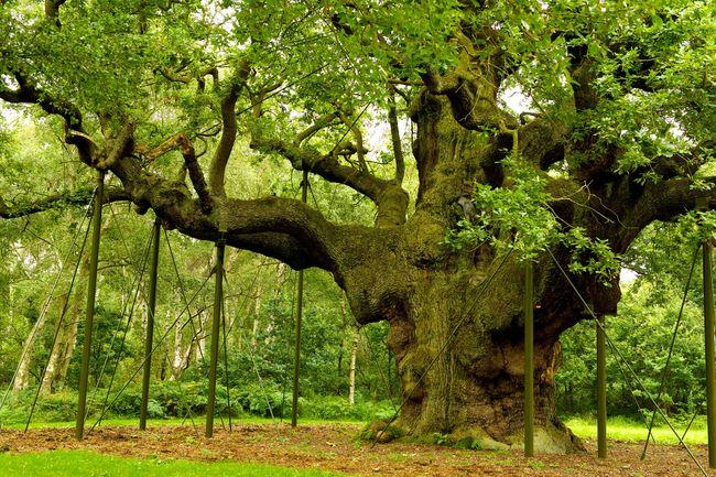 Khaskhabar/मुख्यमंत्री योगी आदित्यनाथ ने 100 साल से ज्यादा पुराने पेड़ों की विरासत वृक्ष घोषित करते हुए संरक्षित करने के निर्देश जारी किए हैं। बरेली मंडल में धार्मिक महत्व वाले 71 पेड़ों को संरक्षित करने की लिस्ट शासन को भेजी जा रही है। इनकी निगरानी के लिए हर गांव में जैव विविधता समिति का गठन भी किया जा रहा है।